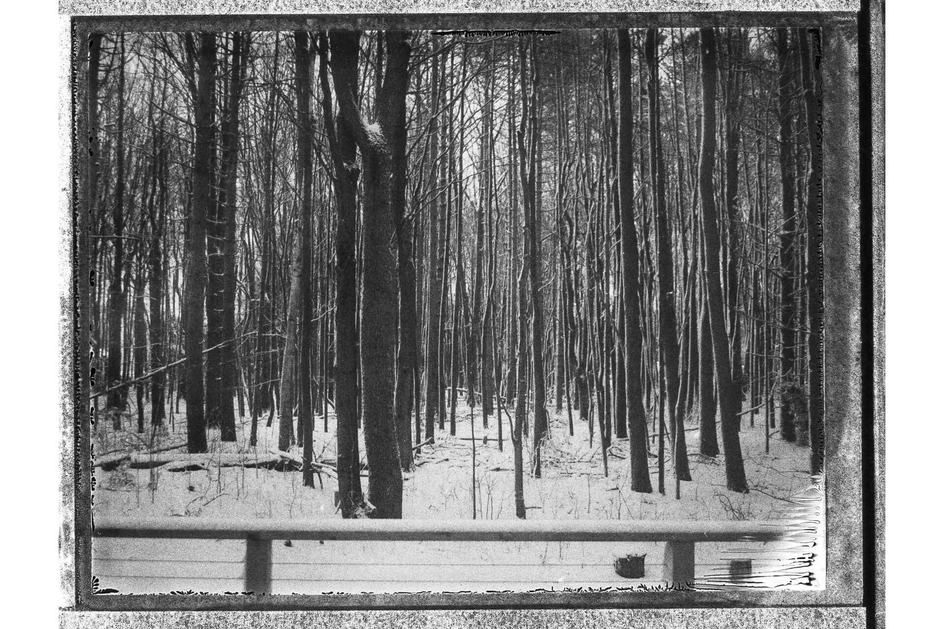 Woods shot in black and white FB-3000b film